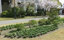 学内緑化プロジェクト
